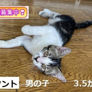 里親会参加猫紹介①+猫ご飯御礼