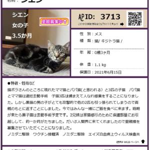 8/1(日曜)里親会参加猫紹介8匹