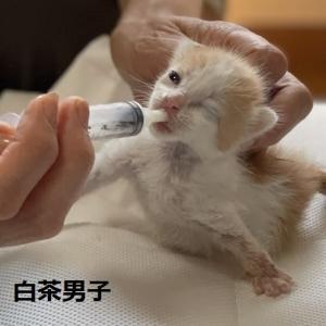 愛護センター3匹子猫成長中