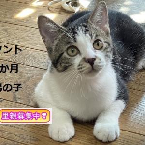 10/3(日)里親会参加猫紹介