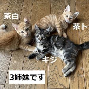 3匹姉妹体重測定