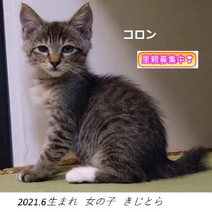 10/17(日)13時~里親会参加猫紹介