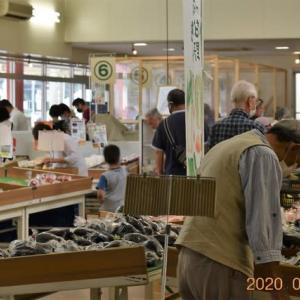 猪名川道の駅で地元の新鮮な野菜を買って来ました。