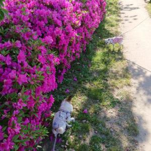 梅小路公園へ散歩