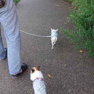滋賀県にお散歩②