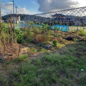 新しい菜園のスタート