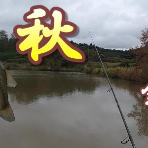 「秋の野池釣り攻略」秋の季節に入ると魚が動き回り釣れにくくなります。