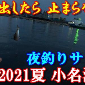 2021年 小名浜港(夏・海釣り)アジ釣り!釣れ出したら 止まらない。今、アジ・サバが釣れてます