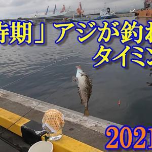 2021年秋 小名浜港アジ釣り!「今時期、アジが釣れる時間帯とタナを検証しました。」【海釣り】【