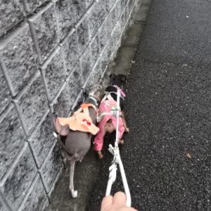 お犬様と一緒の旅