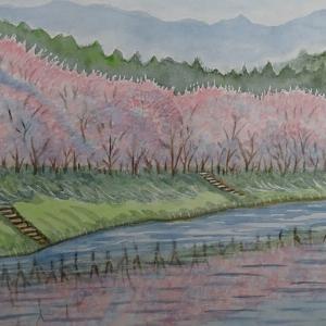 白竜湖桜咲く