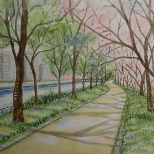 広島京橋川のさくら