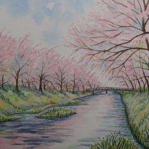 玉造温泉の桜