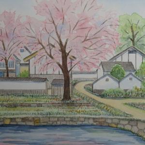 中山間地 県境の桜を追いかけて