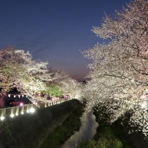 4/2 夜桜