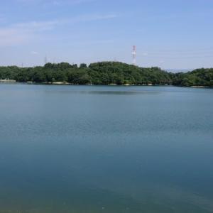 伊坂ダムの紫陽花が見頃です。