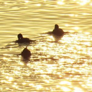 [#4234] 2020年1月に撮影したネイチャフォト(5)朝陽を浴びて