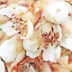 [#4241] 2020年1月に撮影したネイチャフォト(12)ビワの花