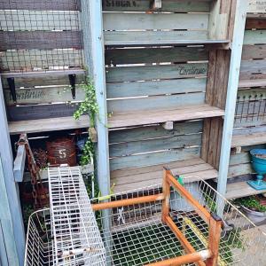 ◆台風直撃対策〜多肉棚は空っぽになりました。。。