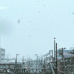 ◆大雪〜。。。多肉棚は〜。。。