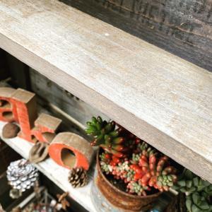 ◆屋根付き多肉棚の悩ましさ〜&DIY〜&新作〜。。。