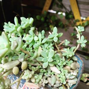◆原因不明!!葉の変形に悩んだり〜凹んだり〜。。。