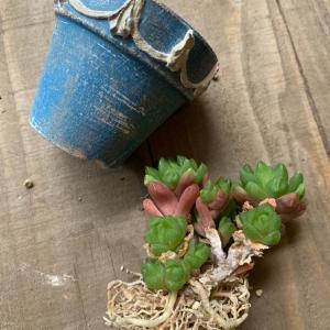 ◆プラポットから鉢植えに〜切り干し大根みたい。。。