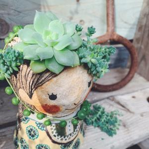 ◆少しづつメンテナンス必要な鉢植え探しを〜。。。