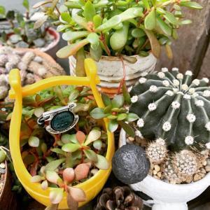 ◆寄せ植えする鉢はあるんですけどね〜。。。