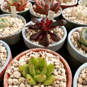 ◆大鉢からお一人鉢へ〜梅雨前の植え替えラッシュ。。。
