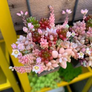 ◆いよいよ東側ベランダも〜&こんなにピンクに。。。