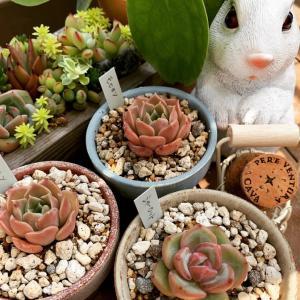 ◆ベランダでウサギを飼う事に〜笑。。。