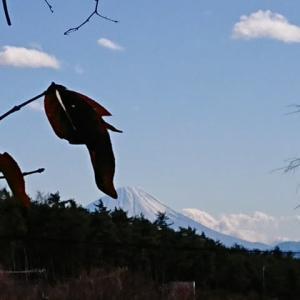 富士山・シモバシラ