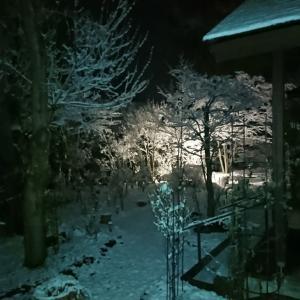 初雪 12㎝