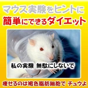 簡単にできるダイエット?はマウス実験をヒントに生まれました。