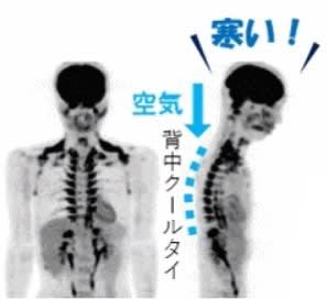 痩せるインナー「背中クールタイ」は脊髄の周りにある褐色脂肪細胞と重なることから、ダイエットの必需品です。