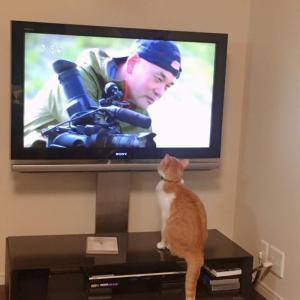 岩合さんを見る猫。