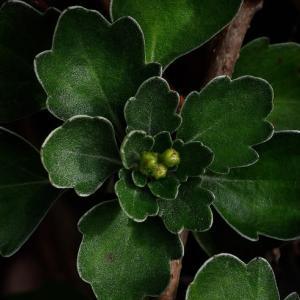 花を咲かせる為の脇役 葉の形状三種