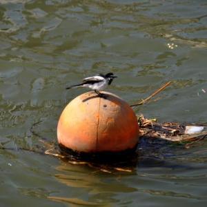 都会でも川辺は心の癒しの場