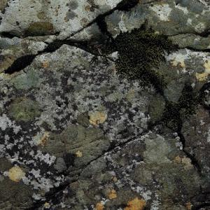 石の形 (迷彩色)