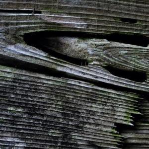 樹の寿命は千年を超える