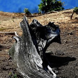 樹の屍 1