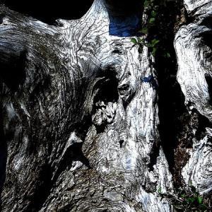 樹の屍 4