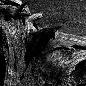 樹の屍 5