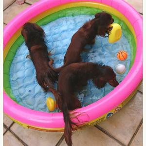 夏の終わりにプール遊び(*_*)