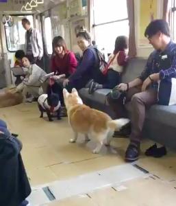 ひたちなか海浜鉄道の「わんわん列車」が最高なんです!!!