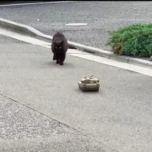 【臨戦態勢】ラジコン戦車が野良ネコに狙われて大ピンチに!!!