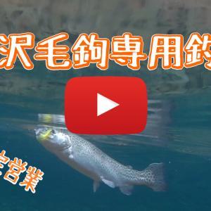 養沢釣行時の動画をアップ