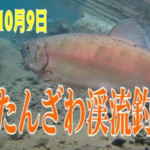 禁漁一発目のうらたん動画