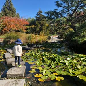 日本庭園で日光浴。